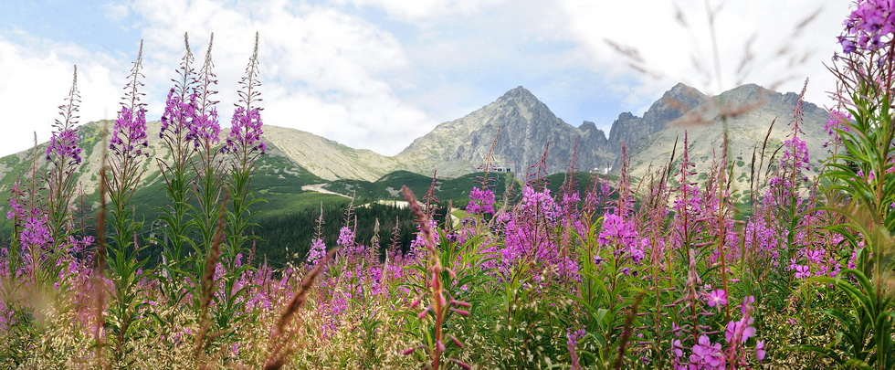 Summer in the Tatras